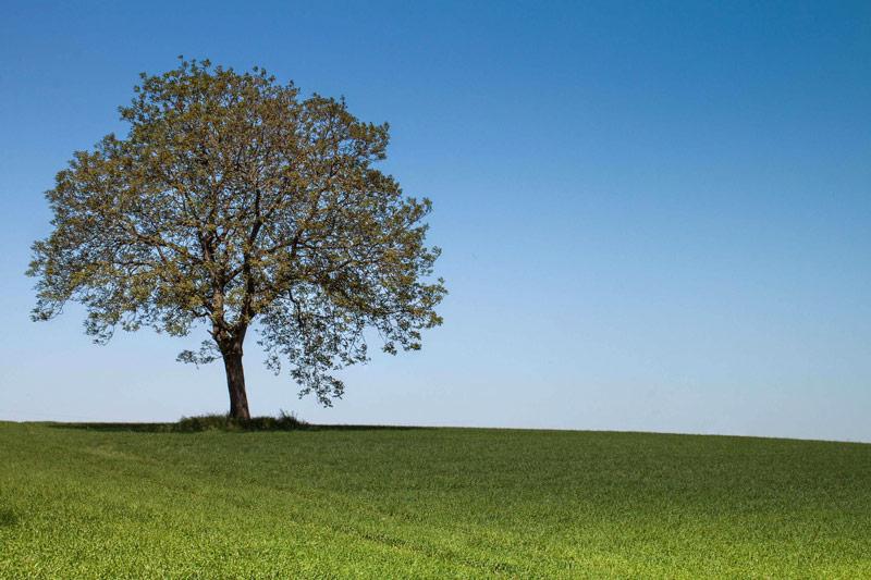 La pensée en arborescence du surdoué